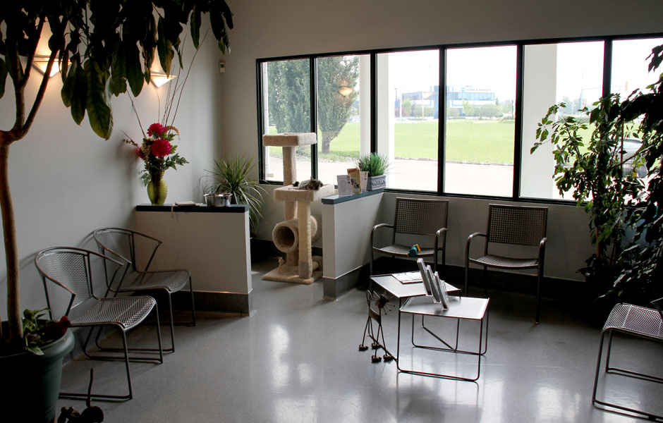 The Animal Medical Centre Edmonton - Waiting Area